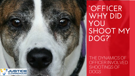 Why Did You Shoot My Dog