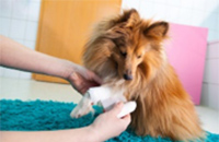 First Aid for the Animal Care Professional