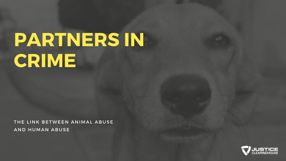 Partners in Crime: The Link between Animal Abuse and Human ...