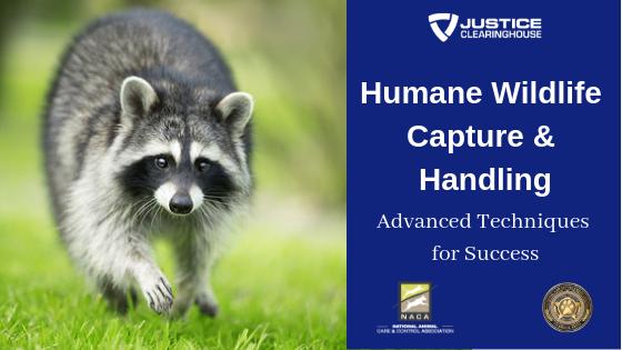 Humane Wildlife Capture & Handling: Advanced Techniques for
