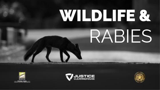 Wildlife and Rabies