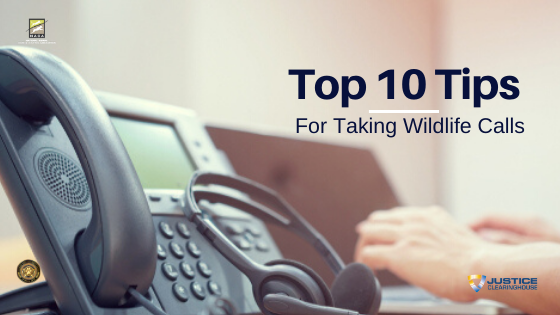 Top 10 Tips for Taking Wildlife Calls